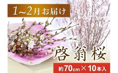 AT03 春を先取り!冬に咲く桜『啓翁桜』(1月お届けSサイズ)