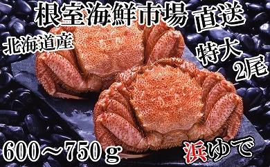 CB-14036 根室海鮮市場<直送>北海道産浜ゆで毛ガニ600~750g×2尾[436731]