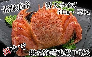 CA-22034 根室海鮮市場<直送>北海道産浜茹で毛がに600~750g×1尾[431787]