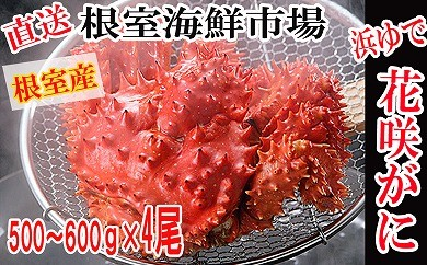 CD-22007 【北海道根室産】根室海鮮市場<直送>浜ゆで花咲がに500~600g×4尾【GCF】[379175]