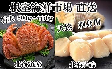 CD-22036 根室海鮮市場<直送>浜ゆで毛ガニ1尾、お刺身用ほたて500g[435730]