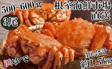 CB-14038 根室海鮮市場<直送>北海道産浜ゆで毛ガニ500~600g×3尾[436733]