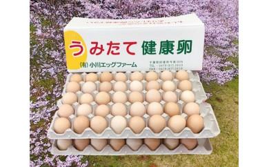 """No.093 匝瑳の""""さくら色""""たまご80個 / 卵 タマゴ 玉子 新鮮 千葉県 人気"""