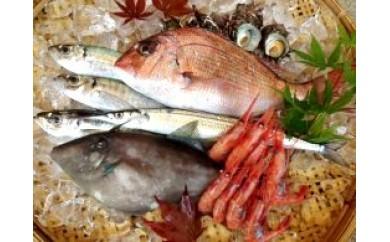 K001 調理ラクラク!能登の魚おまかせセット【50pt】