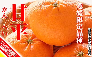 美味!!愛媛県だけのオリジナル高級柑橘「甘平」(ご贈答にも最適!)