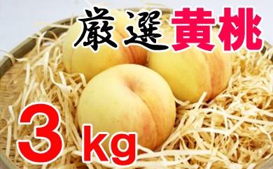厳選品種・黄桃3kg