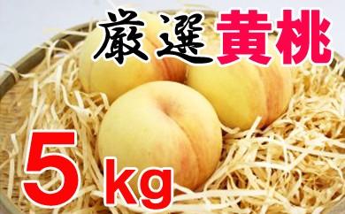【先行予約】厳選品種・黄桃5kg