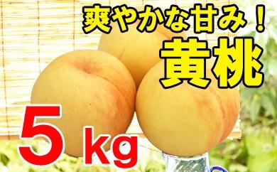 【先行予約】黄桃(ご自宅用)5kg