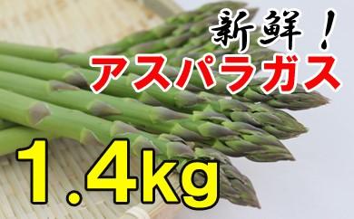 【先行予約】アスパラガス 1.4kg