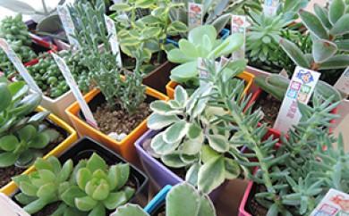 [№5680-0288]多肉植物セット(24種類)