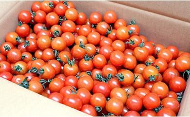 A)木更津水耕組合 完熟ミニトマト 3kg