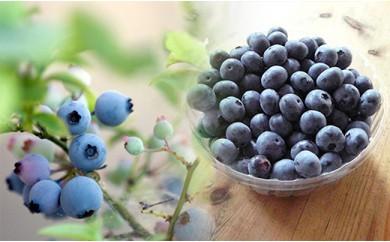 A)ブルーベリー園 のらりくらり ブルーベリー冷凍1kg