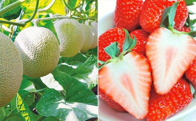 [№5680-0333]静岡県特産温室アローマメロン1玉と高級紅ほっぺいちごデラックス大粒×2トレイ