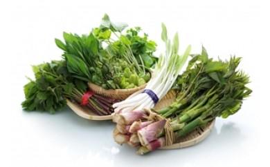 NA305 春の 天然山菜 3種詰め合わせセット