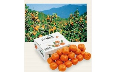 豊橋産 次郎柿