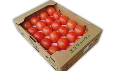 A-113 あさぎり町のトマト4kg