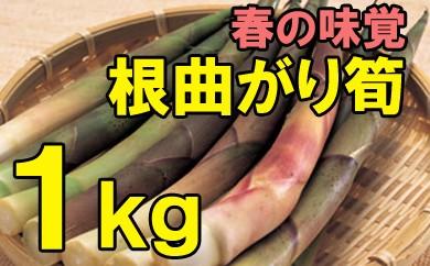 【先行予約】根曲がり筍 1kg