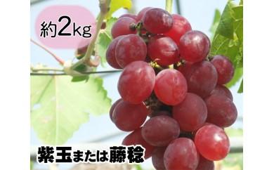 No.050 多古町産ぶどう(紫玉または藤稔)約2kg