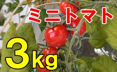 ミニトマト(ご自宅用)3kg