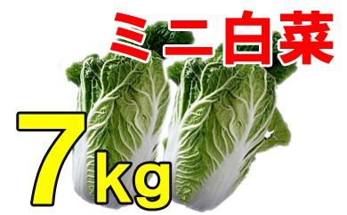 ミニ白菜(ご自宅用) 7kg