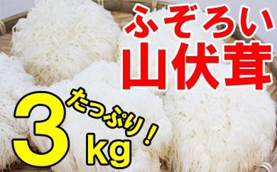 【お福分けシリーズ】ふぞろい山伏茸 3kg