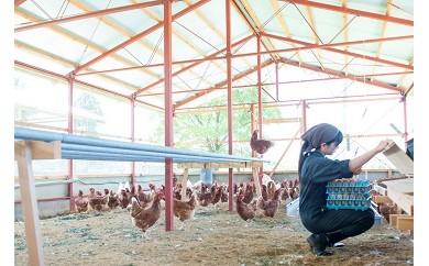 AU08 奥丹波の自然が育む純国産鶏の平飼いたまご80個【27500pt】