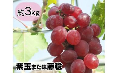 No.014 多古町産ぶどう(紫玉または藤稔)約3kg