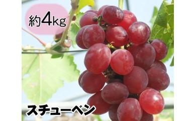 No.013 多古町産ぶどう(スチューベン)約4kg