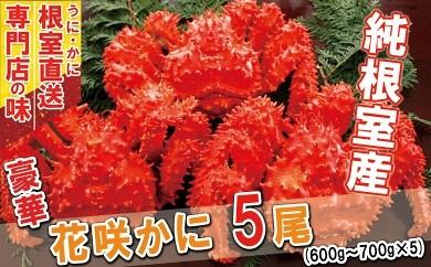 CB-31012 【北海道根室産】ボイル花咲ガニ600~700g×5尾[449405]