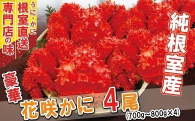 CB-31011 【北海道根室産】ボイル花咲がに700~800g×4尾[419409]