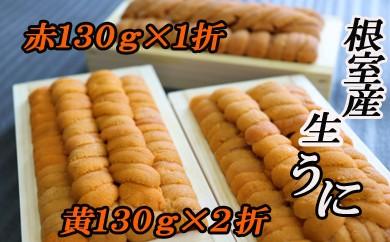 CC-16009 【北海道根室産】エゾバフンウニ(黄色・茶系)130g×3折[450747]