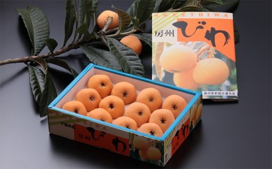 [№5651-0539]房州びわ(ハウス)3Lサイズ12粒入 1箱+ びわ葉紅茶10TB 1袋