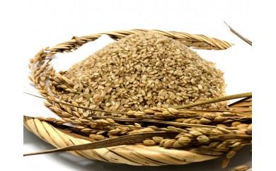 A-225 30年産 玄米 自然栽培『朝日』4㎏×1袋