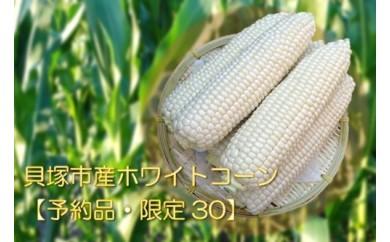 A-48.貝塚市産ホワイトコーン【数量限定30ケース】