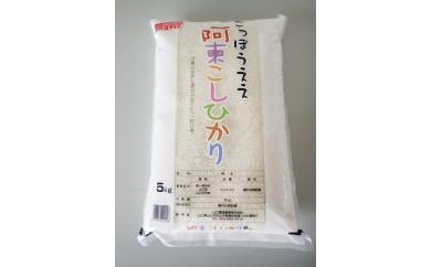 30E-024 阿東こしひかり(普通精米)