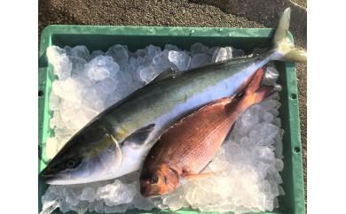No.140 「お炭付き鯛」養マダイ約1.3kg・養ブリ約4kg 各1尾セット