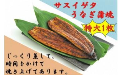 103-266 サスイゲタ・うなぎの蒲焼特大1本