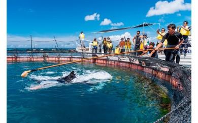 マンタやサメの飼育観察体験ツアー 家族( 大人2名 子供1名)