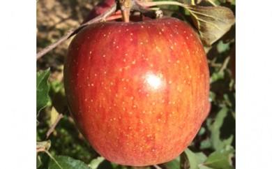 [№5538-0038]髙木りんご園のりんご 約5kg