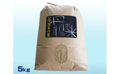 No.542 丹生米の里丹川のお米 ヒノヒカリ玄米 5kg【5pt】