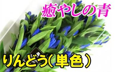りんどう(単色)