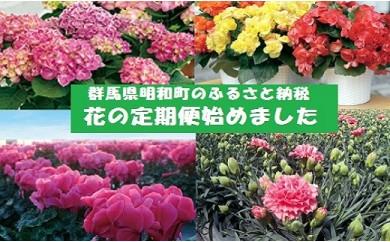 【年間5回お届け】明和町の季節の花いろどりセット