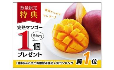 A-50 日向完熟マンゴー(450g~509g×1玉)+【今だけ1玉追加】