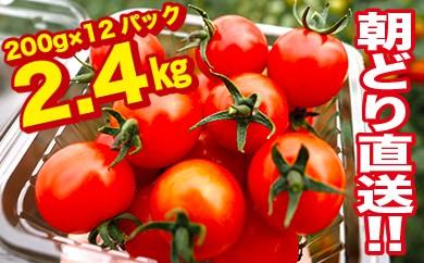 【朝どり直送】高糖度ミニトマト(隔離ベッド栽培)