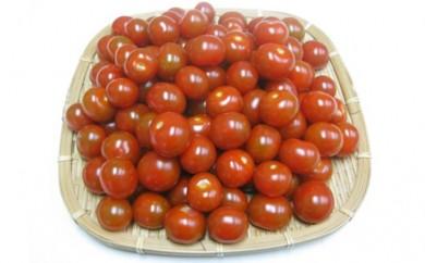 [№4631-1301]【ご家庭用】ヘタなしミニトマト 1.5kg
