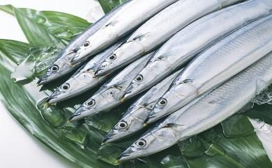 ■サンマ鮮魚便(20尾)