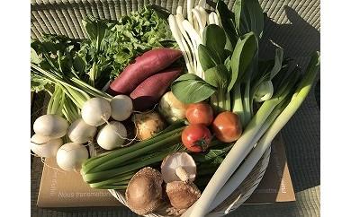 【12ヶ月定期便】自然栽培野菜10~12品目 ※3・4月は米6kgを発送