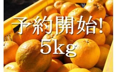 U39 東洋町の完熟ポンカン5kg[5,000円以上]×