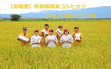 D22【定期便】特別栽培米コシヒカリ(2㎏×3袋×12ヵ月)