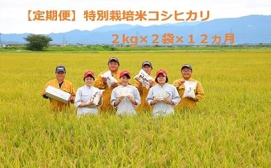 D21【新米!定期便】特別栽培米コシヒカリ(2㎏×2袋×12ヵ月)